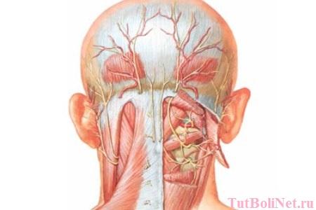 Почему болит голова и шея