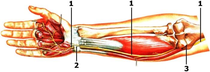 Заболевание нервов руки