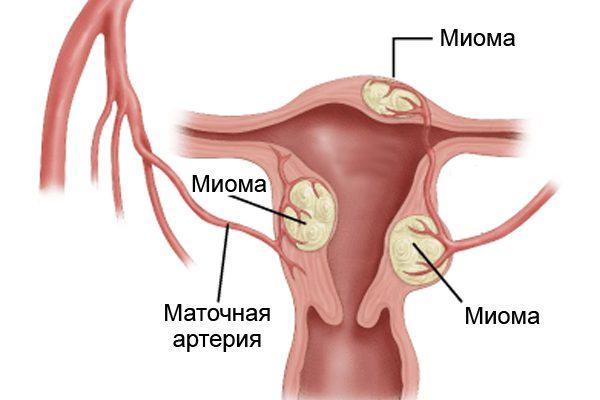 Порно моет языком влагалище после секса русская студентка
